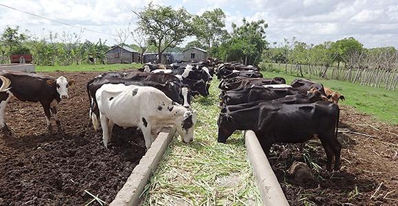 dairying - FAO