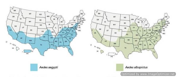 MAPS - Zika maps-Optimized