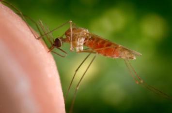 anopheles-gambiae-mosquito-james-gathany-cdc