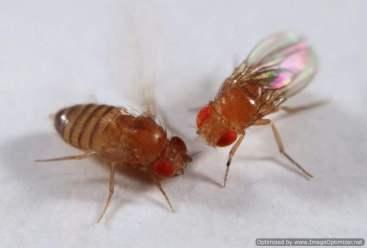 fruit-fly-2-optimized