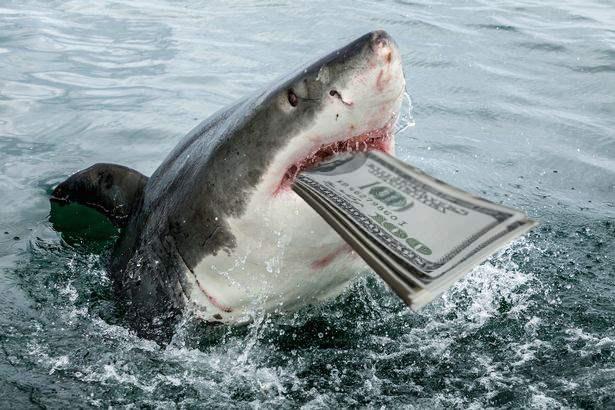 White-Shark-Optimized