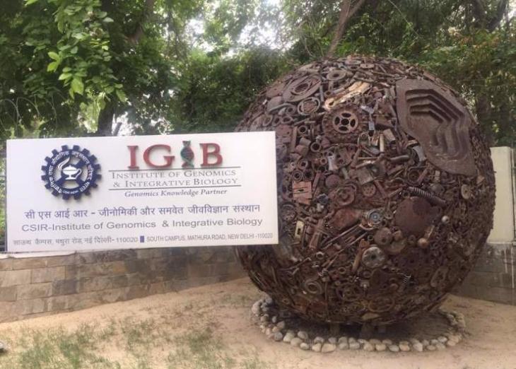 IGIB-Optimized