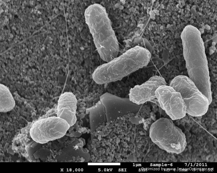 Gut bacteria-Optimized