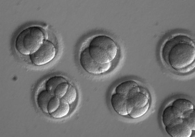 Gene editing - photo