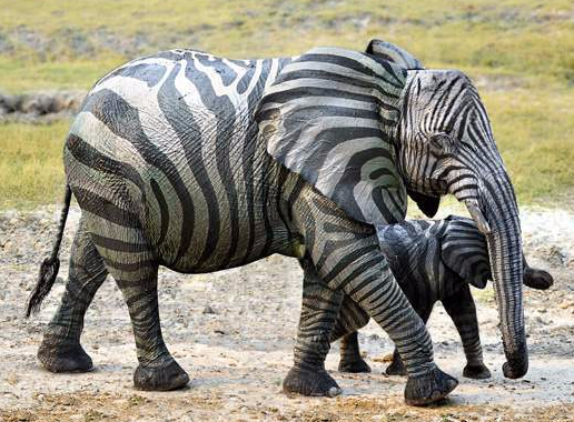 Elephant with stripes-Optimized