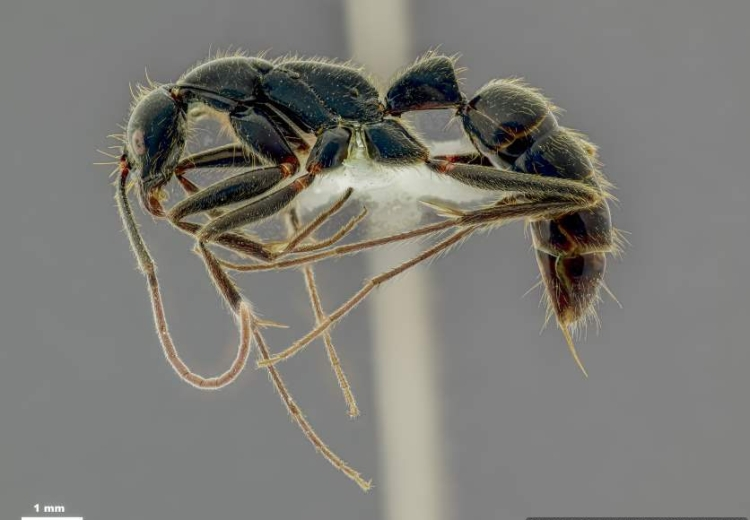 Ant - side view-Optimized
