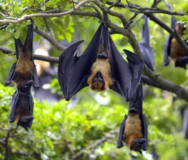 Bats 1-Optimized